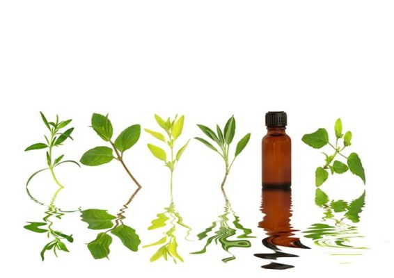 Herb Leaf Selection - essential oils for allergies