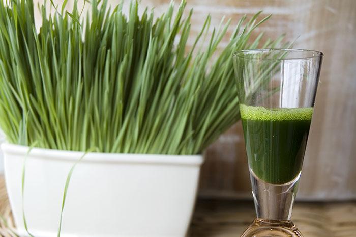 best wheatgrass juicer